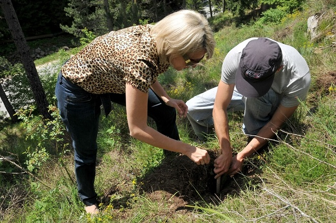 Залесяване на връх Перелик/Reforestation of Perelik Pick